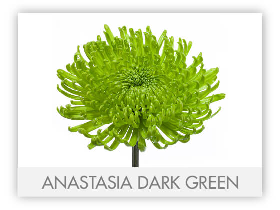 ANASTASIA DARK GREEN10