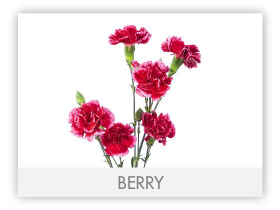 BERRY 10