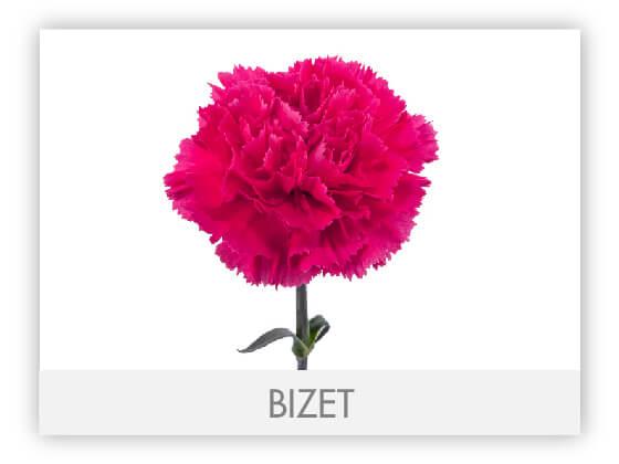 BIZET10