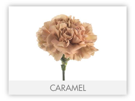 CARAMEL10