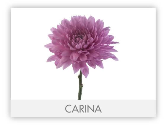 CARINA10