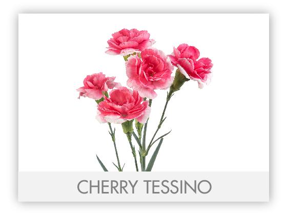 CHERRY TESSINO 10