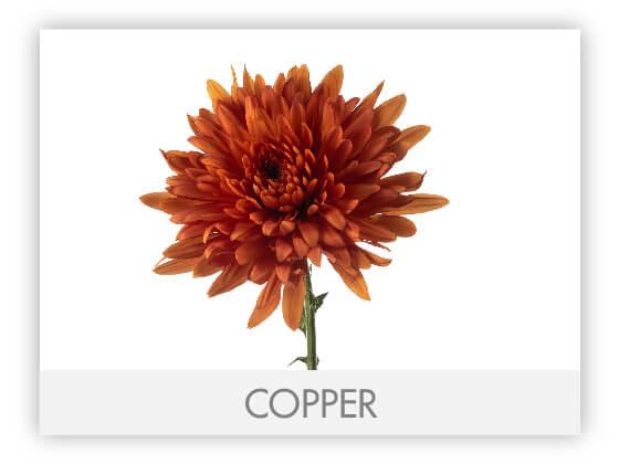 COPPER10