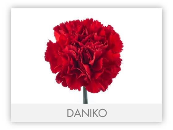 DANIKO10