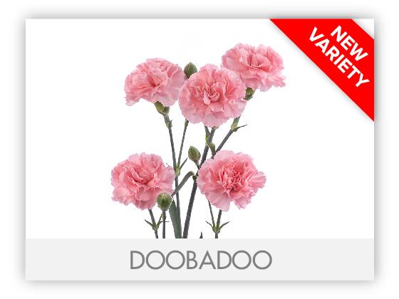 DOOBADOO10