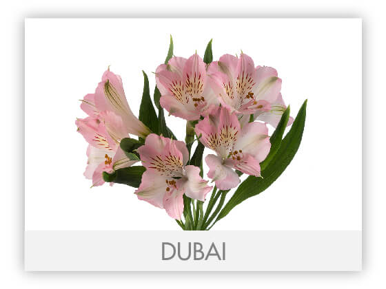 DUBAI10