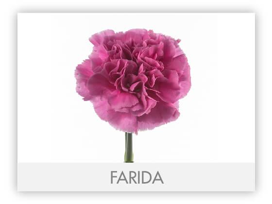 FARIDA10
