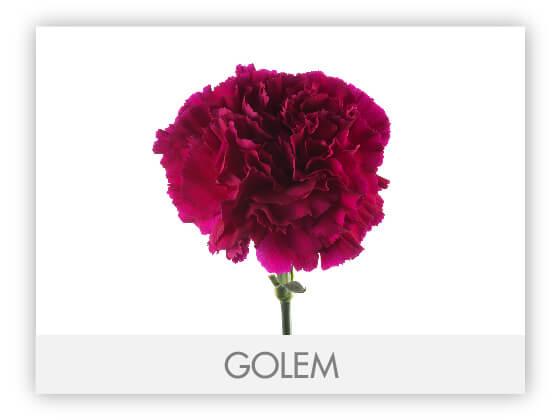 GOLEM10