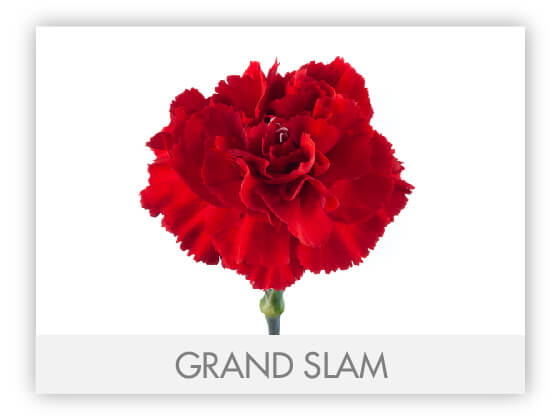 GRAND SLAM 10