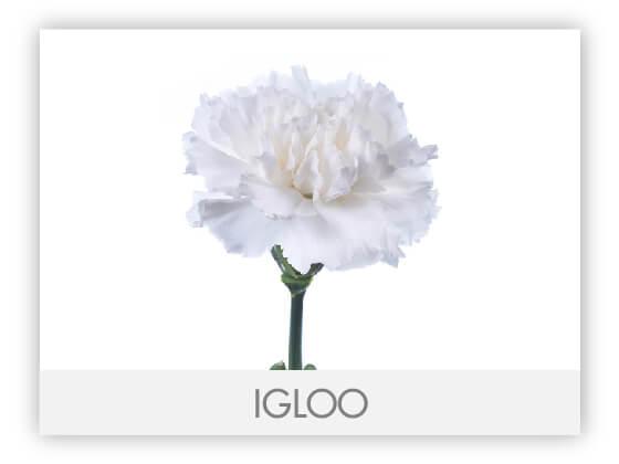 IGLOO10