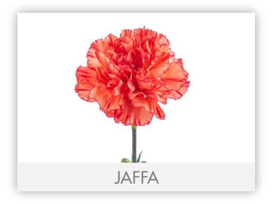 JAFFA10