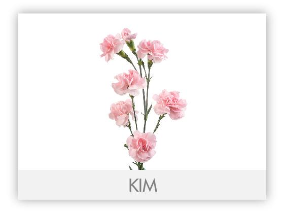 KIM10