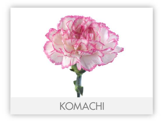 KOMACHI10
