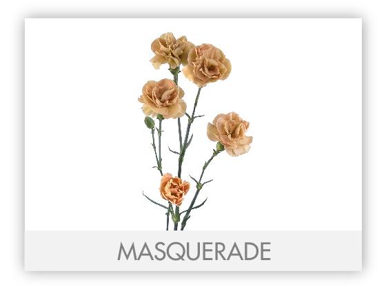 MASQUERADE10