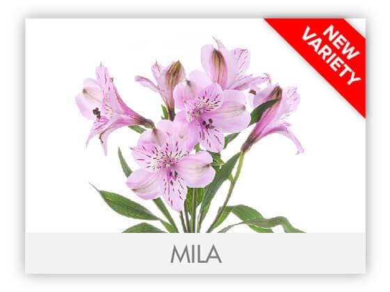 MILA10