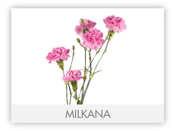 MILKANA 10