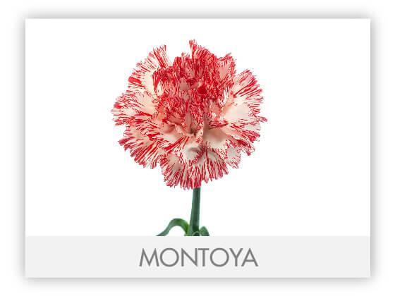 MONTOYA10
