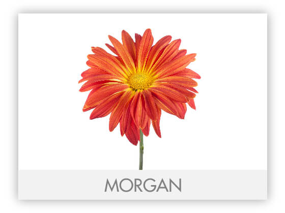 MORGAN10