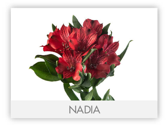 NADIA10
