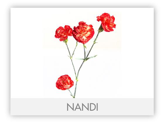 NANDI 10