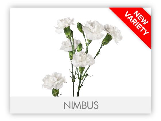 NIMBUS10
