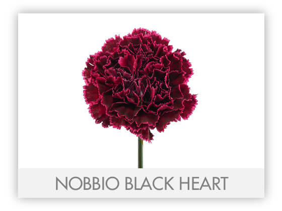 NOBBIO BLACK HEART 10