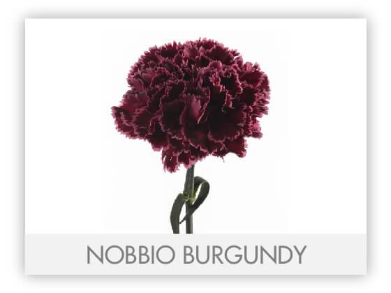 NOBBIO BURGUNDY 10