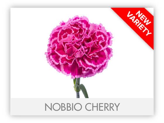 NOBBIO CHERRY 10
