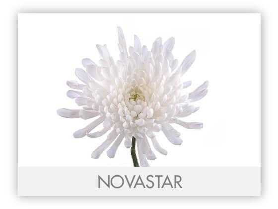 NOVASTAR10
