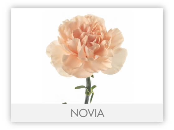 NOVIA10