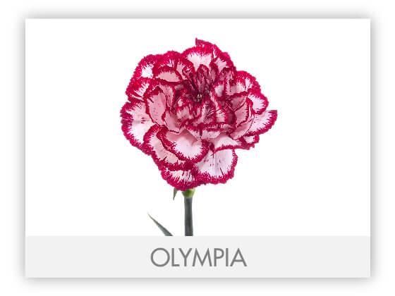 OLYMPIA10
