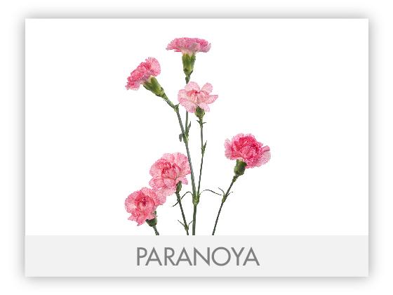 PARANOYA10