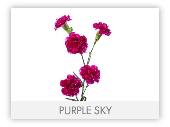 PURPLE SKY 10