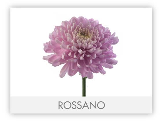 ROSSANO10
