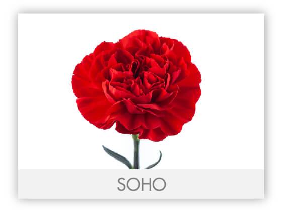SOHO10