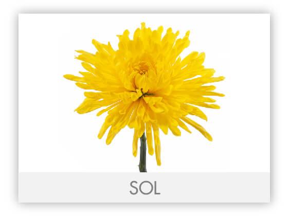 SOL10