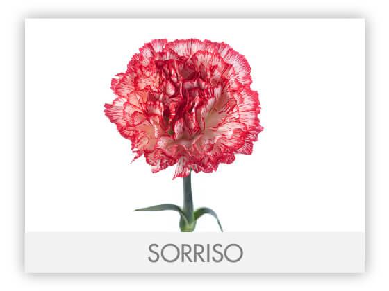 SORRISO10