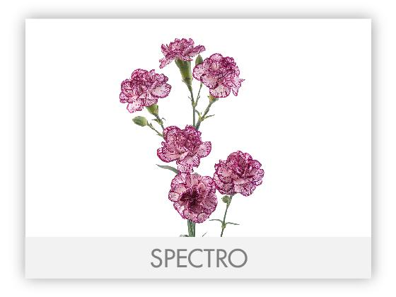 SPECTRO10