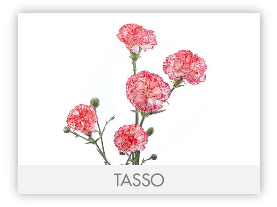 TASSO10