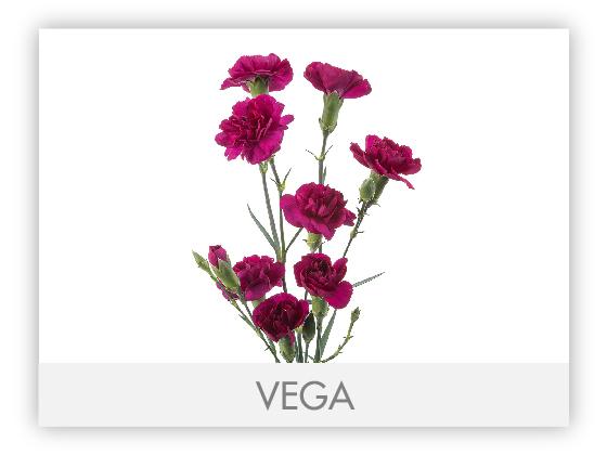 VEGA10