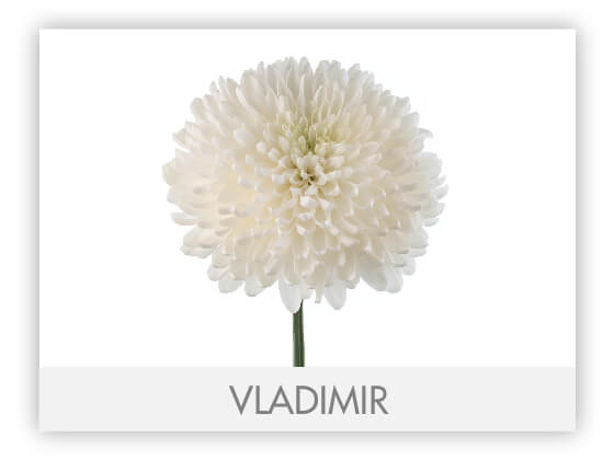 VLADIMIR10