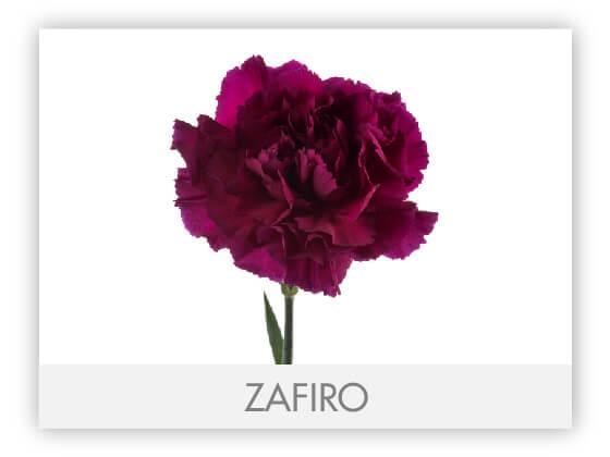 ZAFIRO10