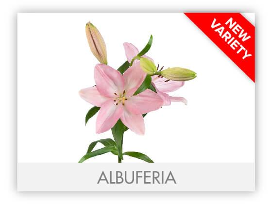 ALBUFERIA10