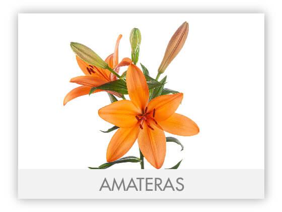 AMATERAS10