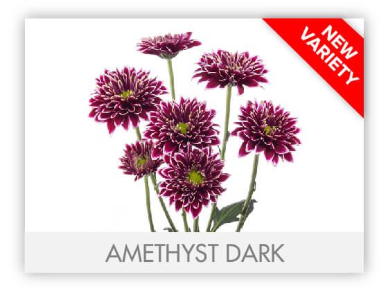 AMETHYST DARK 102