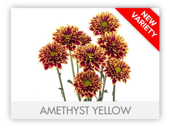 AMETHYST YELLOW 102