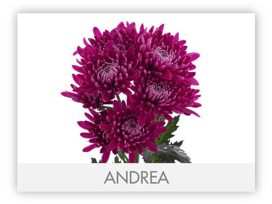 ANDREA101