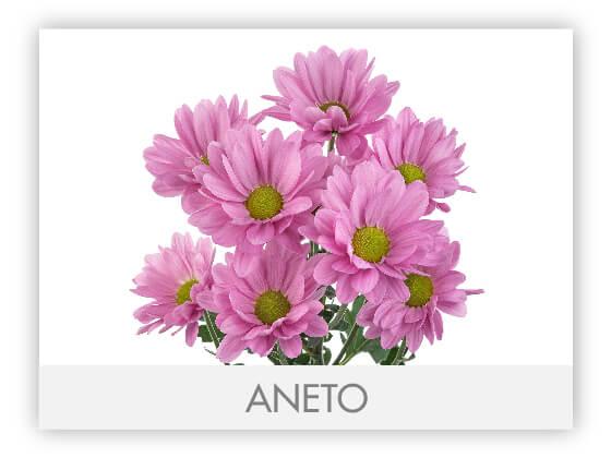 ANETO10