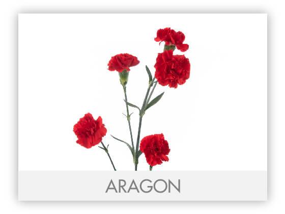 ARAGON101