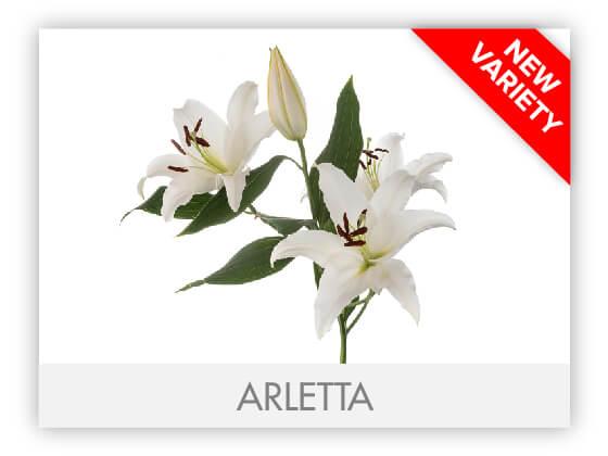ARLETTA10